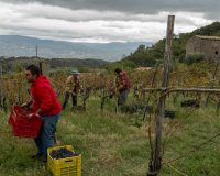 Vini Artigianali Acino (10)