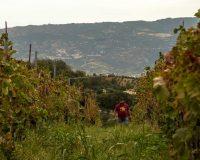 Vini Artigianali Acino (7)