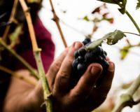 Vini Artigianali Acino (9)