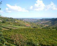 Vini Artigianali Caniette (3)
