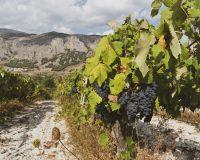 Vini-artigianali-Acino (3)