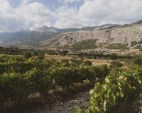 Vini-artigianali-Acino (5)