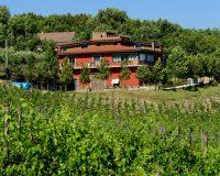 Vini-artigianali-Antico-Castello (22)