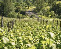 Vini-artigianali-Antico-Castello (24)