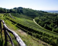 Vini-artigianali-Aquila-del-Torre (1)