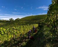 Vini-artigianali-Aquila-del-Torre (3)