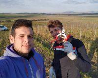 Vini artigianali Bertolino (1)