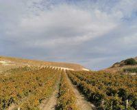 Vini artigianali Bertolino (11)
