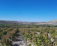 Vini artigianali Bertolino (2)