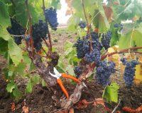Vini artigianali Bertolino (6)