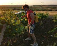 Vini artigianali Bertolino (7)
