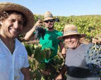 Vini artigianali Bertolino (8)