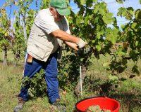 Vini-artigianali-Borgo-Paglianetto (1)