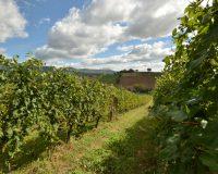Vini-artigianali-Borgo-Paglianetto (10)