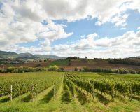 Vini-artigianali-Borgo-Paglianetto (12)