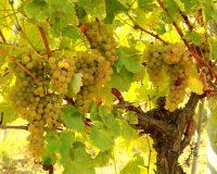 Vini-artigianali-Borgo-Paglianetto (13)