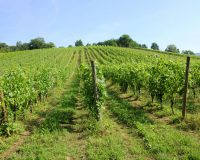 Vini-artigianali-Borgo-Paglianetto (15)