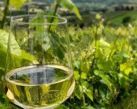 Vini-artigianali-Borgo-Paglianetto (20)