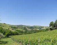 Vini-artigianali-Brunori (7)