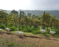Vini-artigianali-Busattina (3)