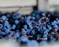 Vini-artigianali-Ca-La-Bionda (3)
