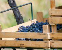 Vini-artigianali-Ca-La-Bionda (4)