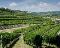 Vini-artigianali-Ca-La-Bionda (7)