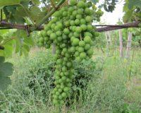 Vini-artigianali-Ca-Liptra (12)