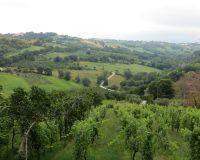 Vini-artigianali-Ca-Liptra (6)