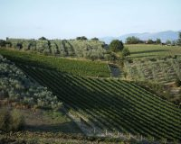 Vini-artigianali-Collecapretta (1)