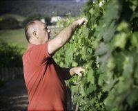 Vini-artigianali-Collecapretta (2)
