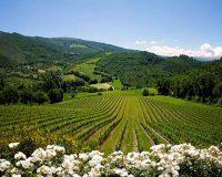 Vini artigianali Colpaola (2)