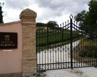 Vini artigianali Colpaola (3)