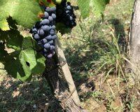 Vini artigianali Cuna (4)