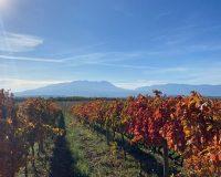 Vini artigianali De Fermo (2)