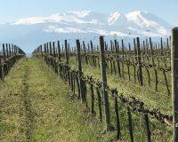 Vini artigianali De Fermo (6)
