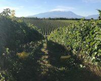 Vini artigianali De Fermo (7)