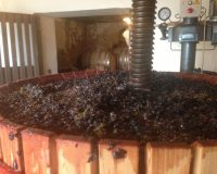 Vini artigianali De Fermo (8)