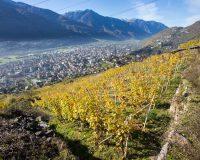 Vini-artigianali-Dirupi (7)