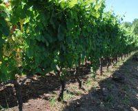 Vini artigianali Enotrio (10)