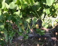 Vini artigianali Enotrio (11)