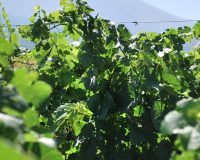 Vini artigianali Enotrio (3)