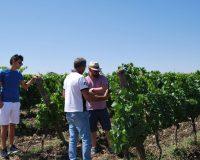 Vini artigianali Enotrio (4)