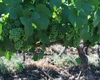 Vini artigianali Enotrio (5)