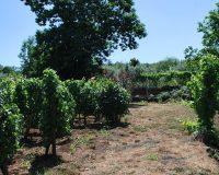 Vini artigianali Enotrio (6)