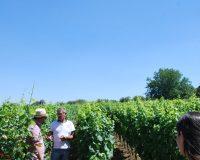 Vini artigianali Enotrio (7)