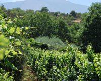 Vini artigianali Enotrio (8)