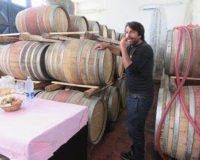 Vini artigianali Etnella (1)