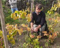 Vini artigianali Etnella (21)