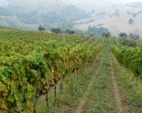 Vini-artigianali-Failoni (5)